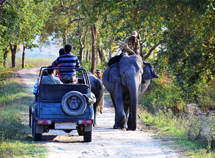 Jeep safaris and elephant  safaris in Kaziranga